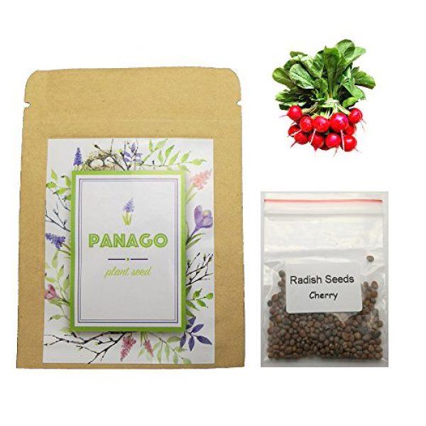 Panago Seeds Organic Seed 2 240+ Radish (Cherry Belle) Seeds for Garden Planting, Non-GMO Organic Heirloom Radish Seeds