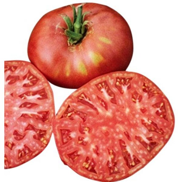 Marde Ross & Company Organic Seed 1 Organic Pink Ponderosa Heirloom Tomato Seeds - Large Tomato - One of The Most Delicious Tomatoes for Home Growing, Non GMO - Neonicotinoid-Free.