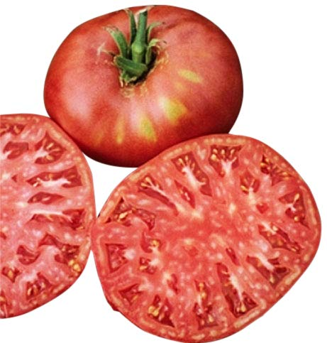 Marde Ross & Company  1 Organic Pink Ponderosa Heirloom Tomato Seeds - Large Tomato - One of The Most Delicious Tomatoes for Home Growing