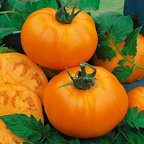 David's Garden Seeds  1 David's Garden Seeds Tomato Beefsteak Orange Heirloom SL9227 (Multi) 25 Non-GMO
