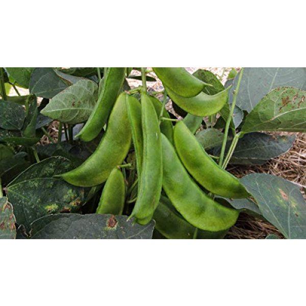 Isla's Garden Seeds Heirloom Seed 4 Henderson Lima Beans,100+ Premium Heirloom Seeds, Fantastic & Must Have for Home Garden!, (Isla's Garden Seeds), Non GMO, Highest Quality Seeds, 90% Germination Rates, 100% Pure