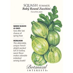 Botanical Interests Heirloom Seed 1 Baby Round Zucchini Summer Squash Seeds - 3 grams - Botanical Interests