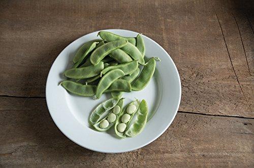 David's Garden Seeds  1 David's Garden Seeds Bean Lima Fordhook 242 SL4949 (Green) 25 Non-GMO