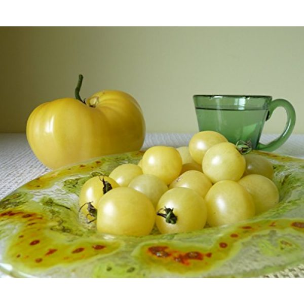 SeedsUA Heirloom Seed 6 Seeds Cherry Tomato Snow White Vegetable Heirloom Ukraine