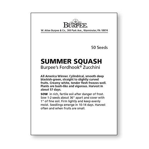 Burpee  4 Burpee Fordhook Zucchini Summer Squash Seeds 50 seeds