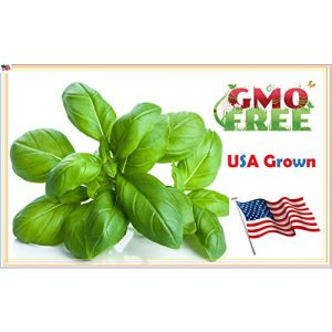 Heirloom Spinach Seeds  1 Heirloom Spinach Bloomsdale Seeds Non Hybrid No GMO