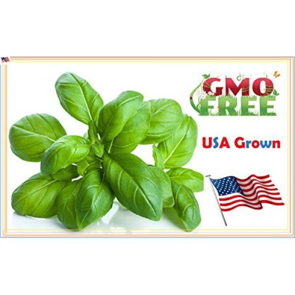 Heirloom Spinach Seeds Heirloom Seed 1 Heirloom Spinach Bloomsdale Seeds Non Hybrid No GMO, Grown in The USA. Heirloom Spincah Seeds 100 Plus Seeds.