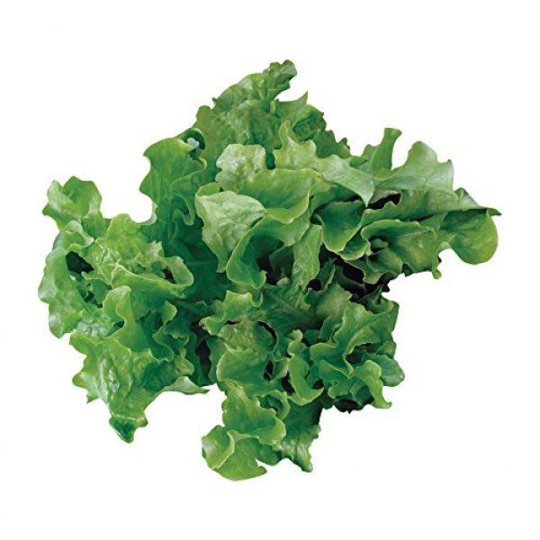 Burpee Organic Seed 1 Burpee Green Salad Bowl Organic Lettuce Seeds 1100 seeds