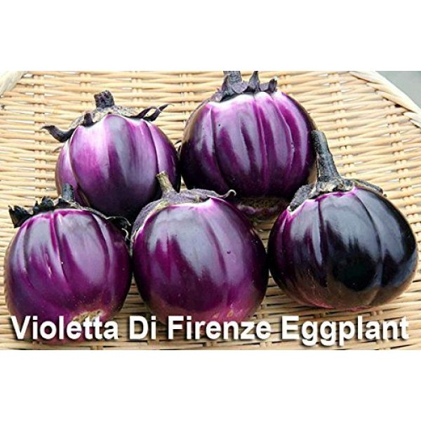 Harley Seeds Heirloom Seed 5 Please Read! This is A Mix!!! 30+ Eggplant Mix Seeds 11 Varieties Heirloom Non-GMO Aubergine, Asian, European, Italian, Profilic, Super Delicious, from USA
