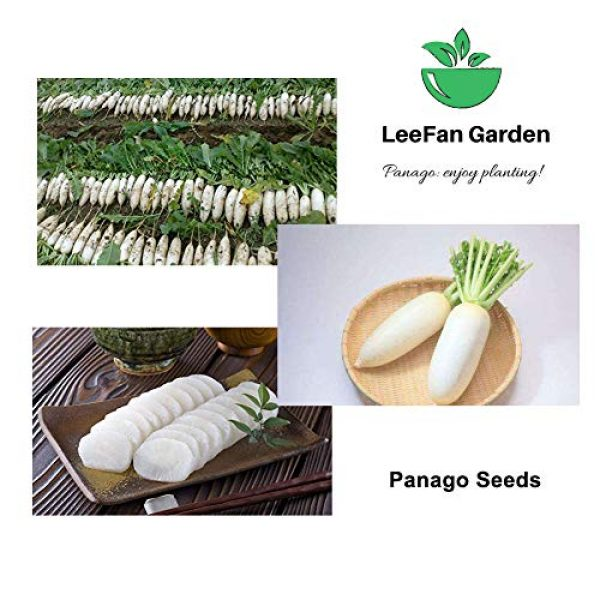 Panago Organic Seed 4 240+ (Daikon) Radish Seeds for Garden Planting, Non-GMO Organic Radish SeedsCheap Widely Adaptable Seeds