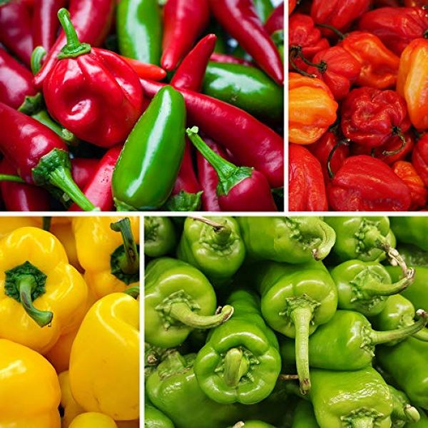 Mountain Valley Seed Company Heirloom Seed 4 8-Pack Non-GMO Heirloom Sweet Pepper Seeds & Hot Pepper Seeds - Anaheim Pepper Seeds, Habanero Seeds, Banana Pepper Seeds, Bell Pepper Seeds, Jalapeno Seeds, Cayenne Pepper Seeds, Green Pepper Seeds