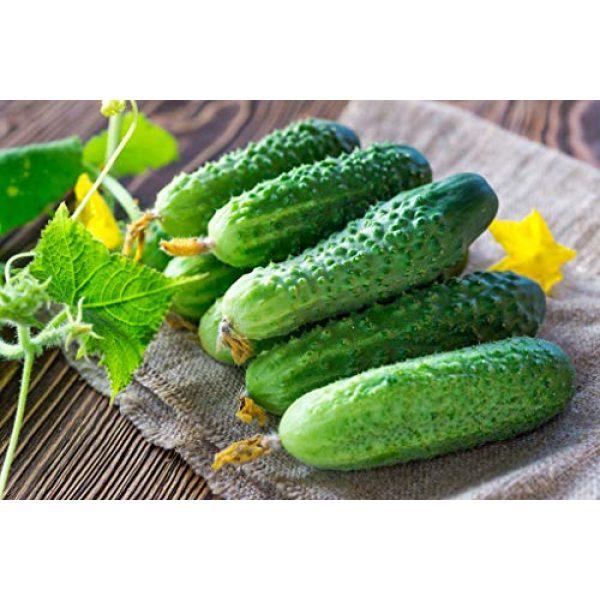 SeedsUA Heirloom Seed 1 Seeds Cucumber Lyalyuk Mini Pickling Vegetable Heirloom Ukraine