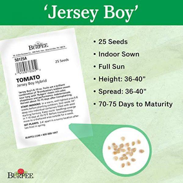 Burpee Heirloom Seed 3 Burpee 'Jersey Boy' Hybrid | Beefsteak Slicing Tomato | Heirloom Flavor | 25 Seeds