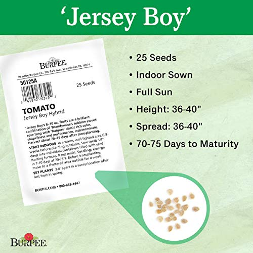 Burpee  3 Burpee 'Jersey Boy' Hybrid | Beefsteak Slicing Tomato | Heirloom Flavor | 25 Seeds