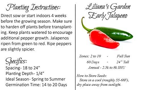 Liliana's Garden  2 Jalapeno Seeds - Early Jalapeno - Fastest Growing Jalapeno - Heirloom - Liliana's Garden