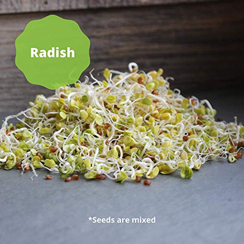 Handy Pantry  3 Handy Pantry 3 Part Salad Sprout Seed Mix - 8 Oz Brand - Organic Sprouting Seeds: Radish