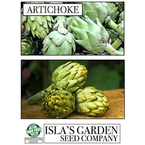 Isla's Garden Seeds Heirloom Seed 4 Green Globe Artichoke Seeds, 50+ Premium Heirloom Seeds, Top Selling Item, (Isla's Garden Seeds), Non GMO, 90% Germination, Highest Quality Seed, 100% Pure
