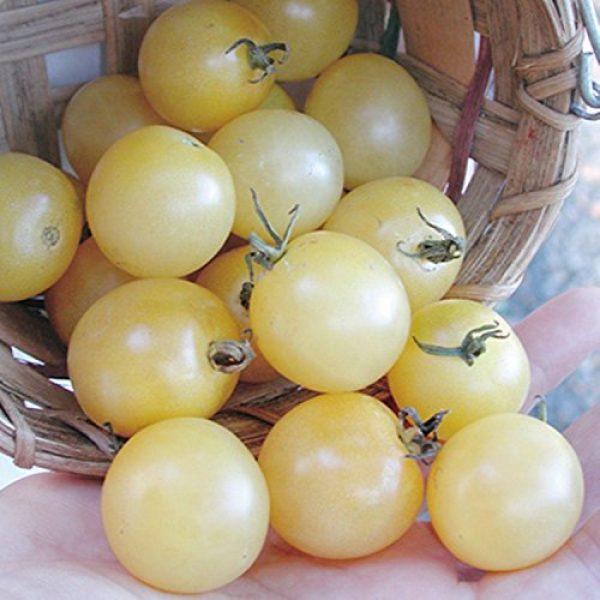 SeedsUA Heirloom Seed 7 Seeds Cherry Tomato Snow White Vegetable Heirloom Ukraine