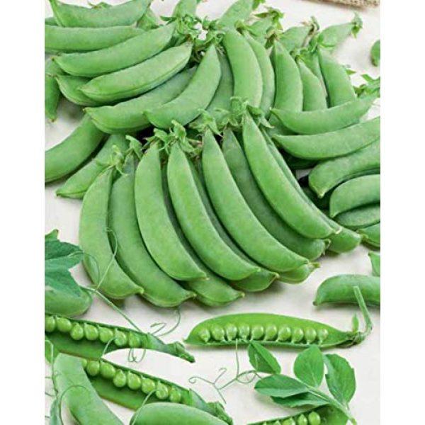 SeedsUA Heirloom Seed 2 Seeds Peas Sugar Giant Sweet Heirloom Vegetable Ukraine