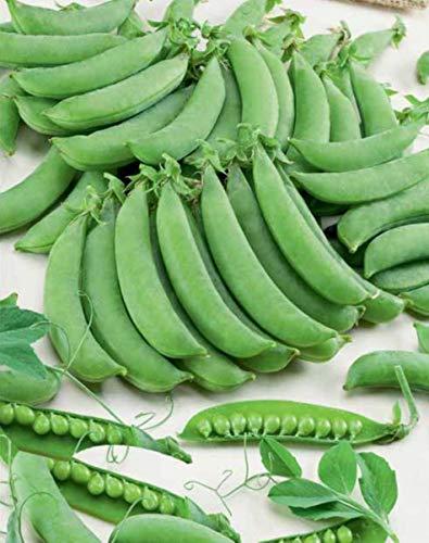SeedsUA  2 Seeds Peas Sugar Giant Sweet Heirloom Vegetable Ukraine