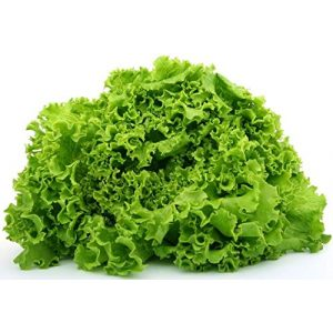 "Isla's Garden Seeds Organic Seed 1 ""Green Ice"" Lettuce Seeds, 1000+ Premium Heirloom Seeds, On Sale, (Isla's Garden Seeds), Non Gmo Organic, 85% Germination, Highest Quality Seeds, 100% Pure"