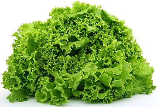 "Isla's Garden Seeds  1 ""Green Ice"" Lettuce Seeds"