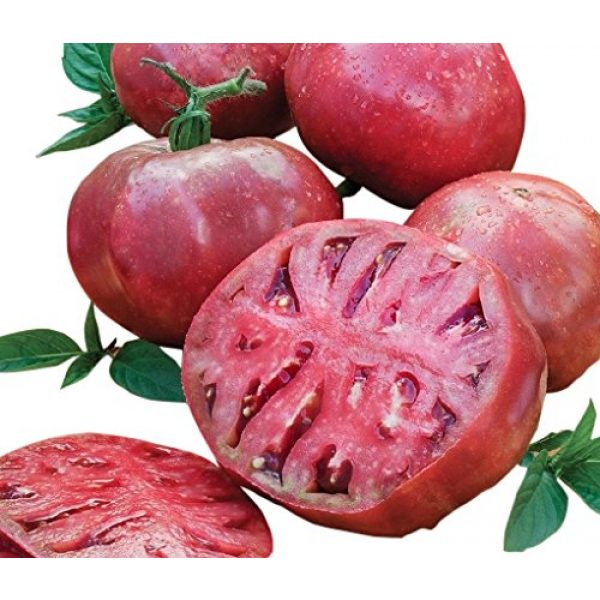 Marde Ross & Company Organic Seed 1 Organic Cherokee Purple Heirloom Tomato Seeds - Large Tomato - One of The Most Delicious Tomatoes for Home Growing, Non GMO - Neonicotinoid-Free.