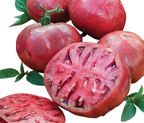 Marde Ross & Company  1 Organic Cherokee Purple Heirloom Tomato Seeds - Large Tomato - One of The Most Delicious Tomatoes for Home Growing