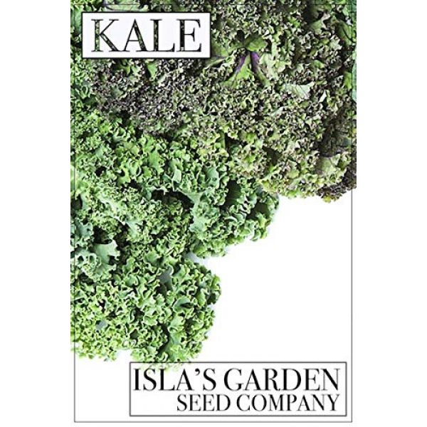 Isla's Garden Seeds Heirloom Seed 5 Lacinato Kale Seeds, 500+ Premium Heirloom Seeds, Popular Choice Kale! AKA: Dinosaur, Italiano, Toscano, Tuscan Kale, (Isla's Garden Seeds), Non GMO, 90% Germination Rates, Highest Quality Seeds
