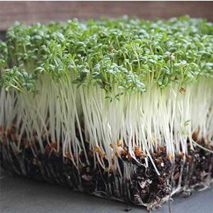 Isla's Garden Seeds Heirloom Seed 1 Cress Curled Microgreens Seeds, Fantastic Addition to Salads! 500+ Premium Heirloom Seeds, Curled Cress Herb Indoors or Outdoors!,(Isla's Garden Seeds), Non GMO, 85-90% Germination, Seeds