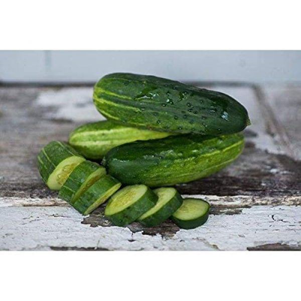 Isla's Garden Seeds Heirloom Seed 2 Spacemaster Cucumber Seeds, 100+ Premium Heirloom Seeds, Delicious! for Pickling or Fresh, (Isla's Garden Seeds), Non GMO, 100% Pure, 90% Germination Rates, Highest Quality!