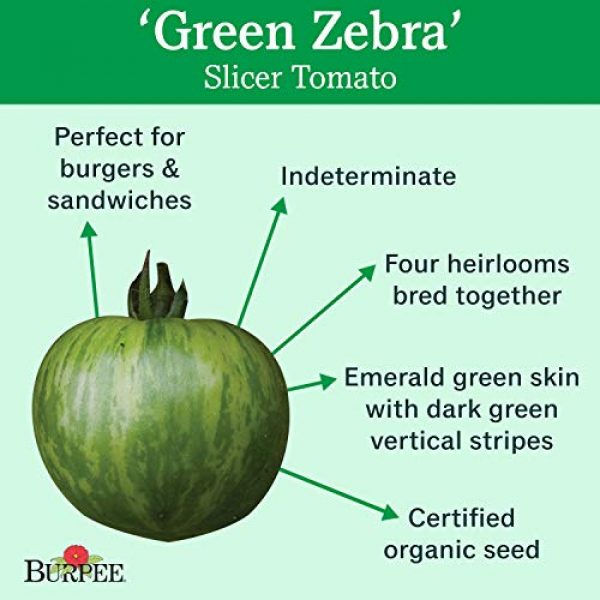 Burpee Organic Seed 2 Burpee 'Green Zebra' Organic   Green Slicing Tomato   30 Seeds