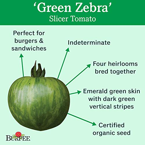 Burpee  2 Burpee 'Green Zebra' Organic | Green Slicing Tomato | 30 Seeds