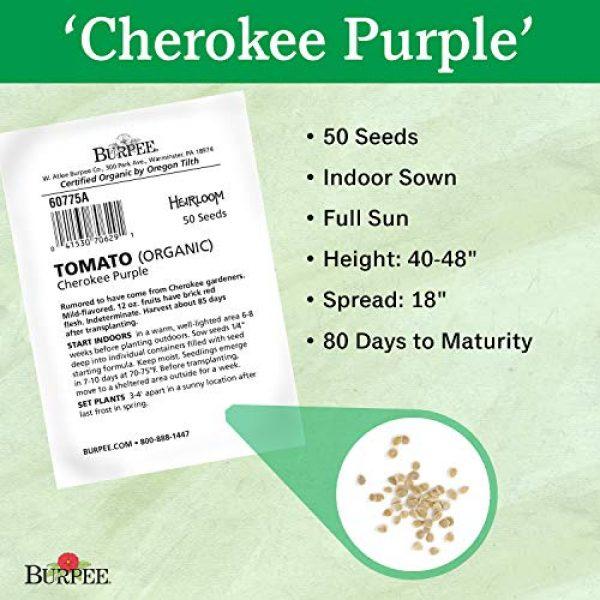 Burpee Organic Seed 3 Burpee 'Cherokee Purple' Heirloom | Large Purple Slicing Tomato | Rich Flavor | 50 Seeds