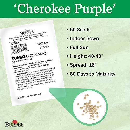 Burpee  3 Burpee 'Cherokee Purple' Heirloom   Large Purple Slicing Tomato   Rich Flavor   50 Seeds