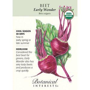 Hirts: Seed; Vegetable Organic Seed 1 Early Wonder Beet Seeds - 2 grams - Organic by Hirts: Seed; Vegetable
