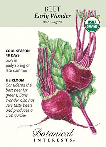 Hirts: Seed; Vegetable  1 Early Wonder Beet Seeds - 2 grams - Organic by Hirts: Seed; Vegetable