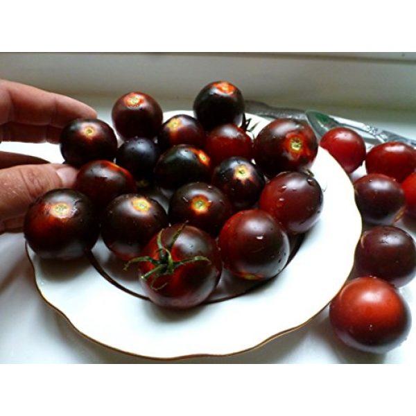 Fertile Ukraine Seeds Heirloom Seed 5 Seeds Cherry Tomato Black Early Vegetable Heirloom Ukraine