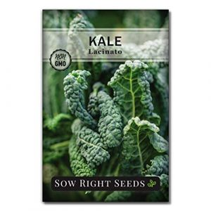 Sow Right Seeds  1 Sow Right Seeds - Lacinato Kale Seed for Planting - Non-GMO Heirloom Packet with Instructions to Plant a Home Vegetable Garden
