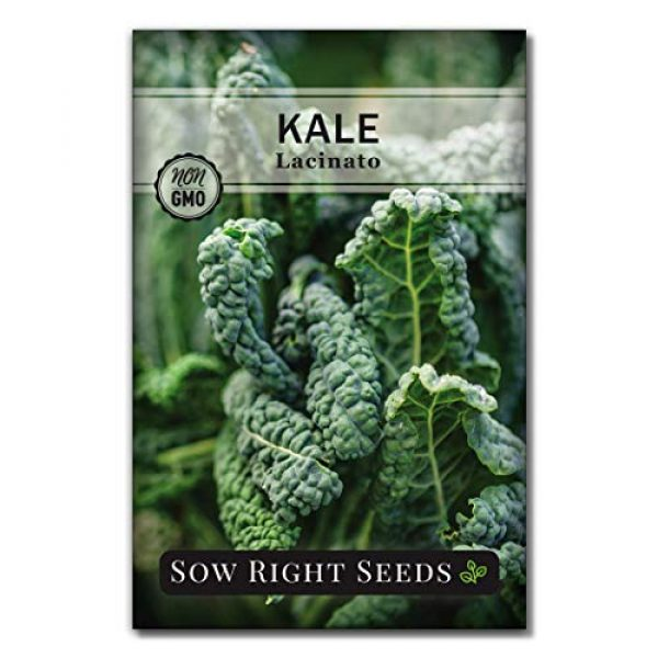 Sow Right Seeds Heirloom Seed 1 Sow Right Seeds - Lacinato Kale Seed for Planting - Non-GMO Heirloom Packet with Instructions to Plant a Home Vegetable Garden, Great Gardening Gift (1)