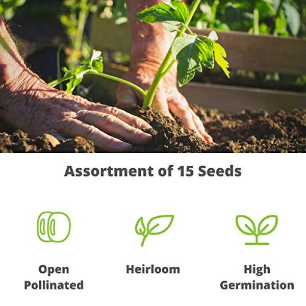 Mountain Valley Seed Company Heirloom Seed 2 Heirloom Vegetable Garden Seed Collection Assortment of 15 Non-GMO, Easy Grow, Gardening Seeds: Carrot, Onion, Tomato, Pea, Cucumber, Beets, Basil, More