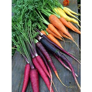 Isla's Garden Seeds Heirloom Seed 1 Rainbow Blend Carrot Seeds, 500+ Premium Heirloom Seeds, Rare Varieties, Colorful Mix & Fantastic Addition to Your Garden! (Isla's Garden Seeds), 85% Germination Rate, Non GMO, Highest Quality