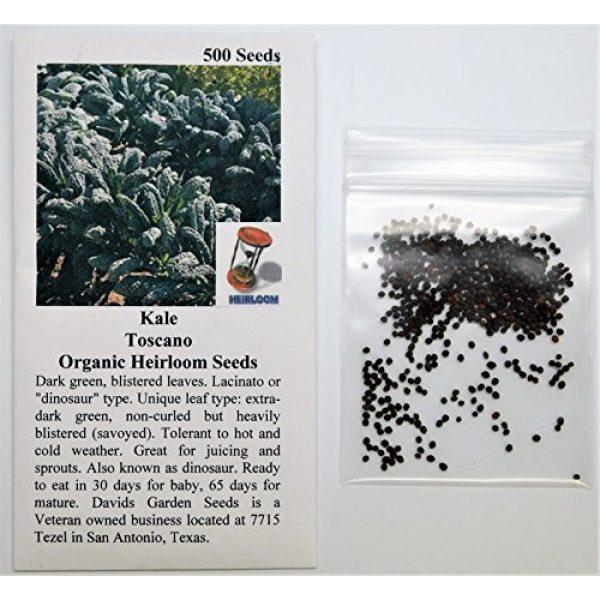 David's Garden Seeds Heirloom Seed 2 David's Garden Seeds Kale Toscano SL2123 (Green) 500 Non-GMO, Heirloom Seeds