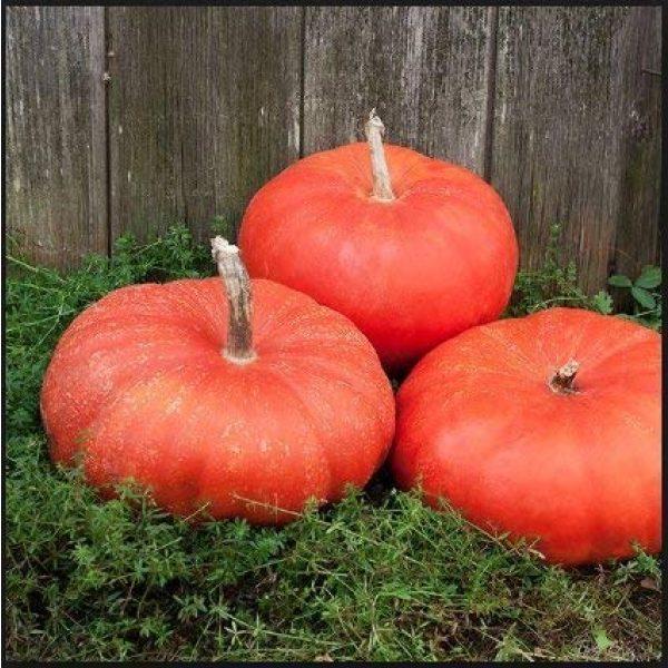 Isla's Garden Seeds Heirloom Seed 1 Cinderella Pumpkin Seeds, 10+ Premium Heirloom Seeds, A Must Have Pumpkin in Your Garden! Rouge VIF dEtampes (Isla's Garden Seeds), Non GMO, 85-90% Germination Rates, Seeds