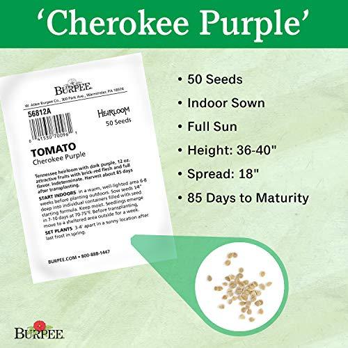 Burpee  2 Burpee Cherokee Purple' Heirloom Large Slicing Tomato Rich Flavor
