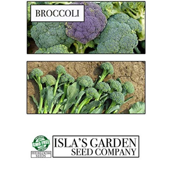 Isla's Garden Seeds Heirloom Seed 3 Broccoli Calabrese Sprouting Seeds, 1000+ Premium Heirloom Seeds, Excellent for Home Garden! (Isla's Garden Seeds), Non GMO, 85% Germination Rates, Seeds