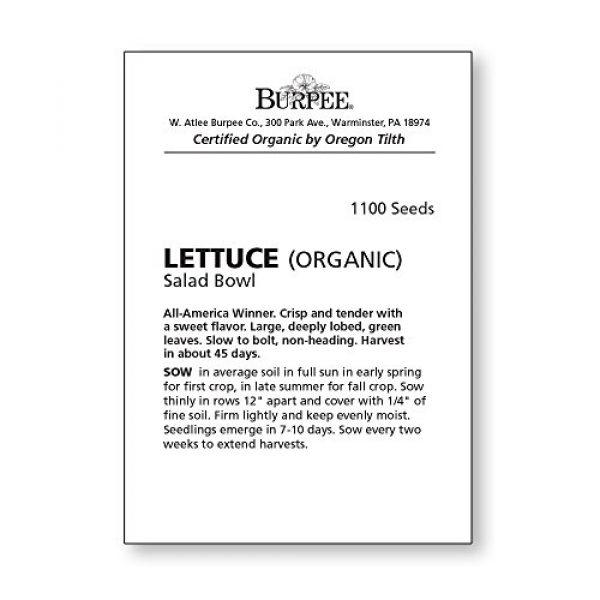 Burpee Organic Seed 3 Burpee Green Salad Bowl Organic Lettuce Seeds 1100 seeds