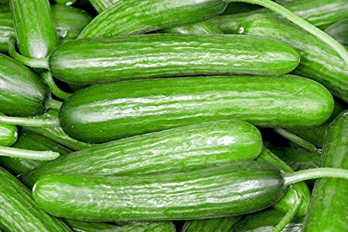 Harley Seeds  5 30+ Persian Beit Alpha (A.k.a. Lebanese) Cucumber Seeds Heirloom NON-GMO Crispy Fragrant From USA