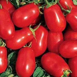 Burpee Organic Seed 1 Burpee 'Roma' Organic | Red Sauce & Paste Tomato | 250 Seeds