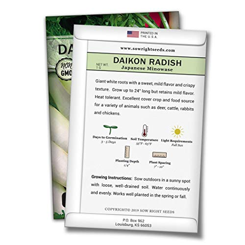 Sow Right Seeds  2 Sow Right Seeds - Japanese Minowase Daikon Radish Seed for Planting - Non-GMO Heirloom Packet with Instructions to Plant a Home Vegetable Garden - Great Gardening Gift (1)